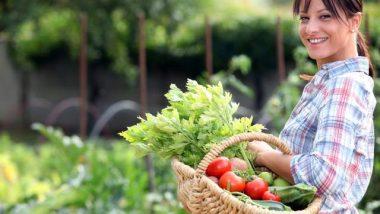 Harvest from the Vegetable Garden